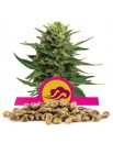 Royal Queen Seeds Blue Mystic Bulk 100 szt.