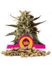 Royal Queen Seeds Bubblegum XL 100 szt.