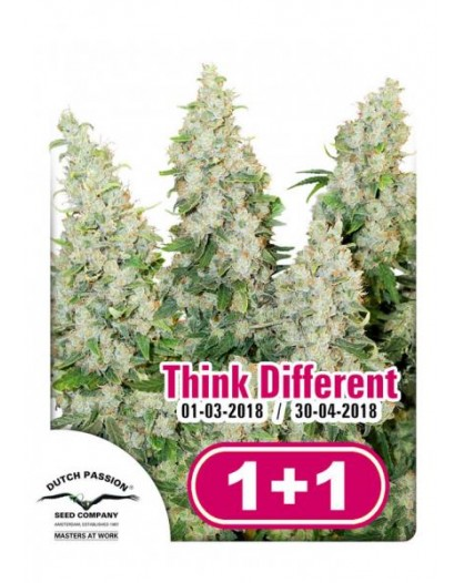 Think Different - 3szt. DUTCH PASSION