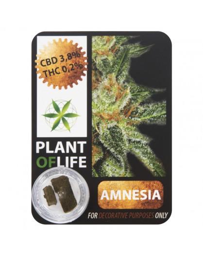 CBD Hash 3.8% Amnesia Plant Of Life