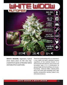 WHITE WIDOW AUTO 3 Nasiona