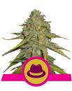 Nasiona Bubblegum XL Royal Queen Seeds