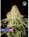 Girl Scout Cookies - Monks Seeds